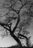 06 Reflection.jpg