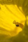 Flower Climber