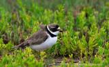 Grand Isle 2013 Bird Migration