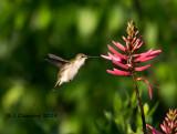 Spring Migration 2015