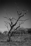 Dry nature