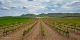 Navarran Vineyard