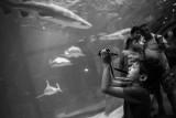 aquariumMMweb-4.jpg