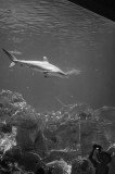 aquariumMMweb-6.jpg