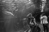 aquariumMMweb-5.jpg