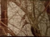 OWLS .... HISTORICAL  NON-DIGITAL  /  NON-NUMERIQUE