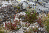 pStryker-forest-canyon-trail-red-plants_0729.jpg