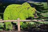 pStryker-idaho-falls-garden-bear_9374.jpg