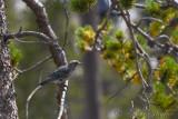 pStryker-yellowstone-bird_0268.jpg