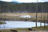 pStryker-yellowstone-buffalo-skirmish_9949.jpg
