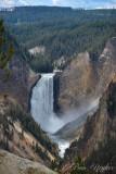 pStryker-yellowstone-lower-falls_9847.jpg