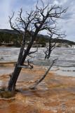 pStryker-yellowstone-mammoth-springs_0497.jpg