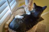 Cat Tree Love