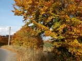 Fall time around Kiustendil