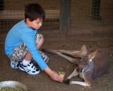 Well-fed kangaroo refuses Charlie's offer