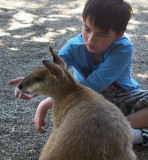 Charlie gets wallaby slightly interested