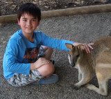 Wallaby allows contact, not sure about communication