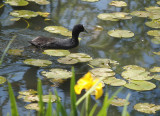Canberra 2014: Floriade, Museums and Food.