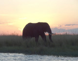 1380: Sun setting behind an elephant