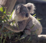 Australian zoos, parks and gardens