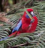 Australian National Botanic Garden, Canberra