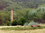 Industrial ruins in the bush