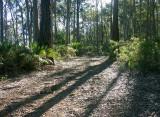 Scenic Forest Walk - return route