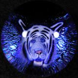 White Tiger Heaven Size: 1.37 Price: SOLD