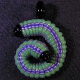 #196: Micah Evans, Caterpillar Miller Size: 1.94 x 1.36 Price: $150