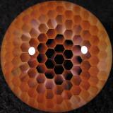 #2: Honeysphere  Size: 1.10  Price: $350