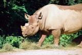 0008_rhino.JPG