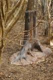 9337artificial stump.JPG