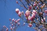 Spring at Laumeier Park 040914
