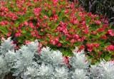 Missouri Botanical Gardens (Shaw's Gardens) 081014