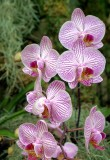 Orchid Show 032015