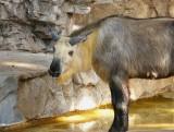 Zoo 071715