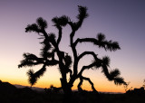 Joshua Tree National Park – California
