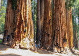 Sequoia National Park – California
