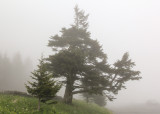 Fog at Clingmans Dome in Great Smoky Mountains National Park