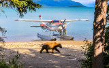 Planes, Trains, Automobiles, Boats, Ski Planes, Busses, Ferryboats, Floatplanes and the back of a Police SUV  – Alaska
