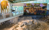 Waco Mammoth National Monument – Texas