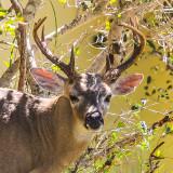National Key Deer Refuge - Florida