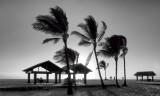 Hawaii Island- My Home (B&W)