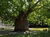 West Gate Gardens Canterbury