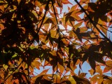 Sunny Mount Ephraim Gardens