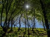 Walk in the woods in Devon