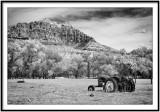Grafton mono Utah