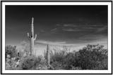 Magic Desert