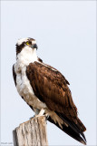 Osprey, Lincoln County, WA