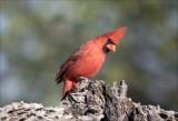 Cardinal Pond at Elephant Head, AZ